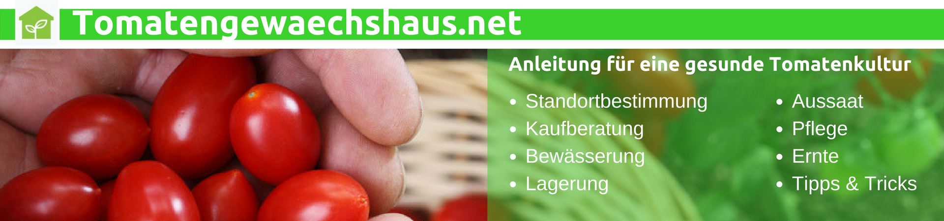 Tomatengewächshaus: Diese Tomatenhäuser empfehlen wir Ihnen