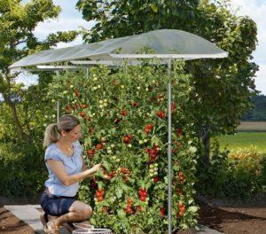 Ein Tomatengewächshaus kaufen