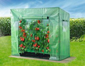 Favorit ᐅᐅ】Tomatengewächshaus: Finde Dein passendes Tomatenhaus CU51